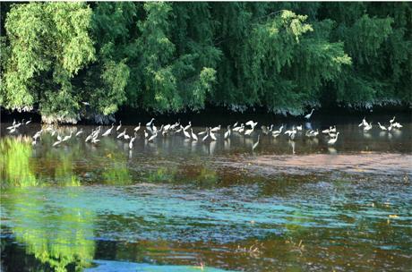 大亚湾红树林公园_大亚湾红树林城市湿地公园简介